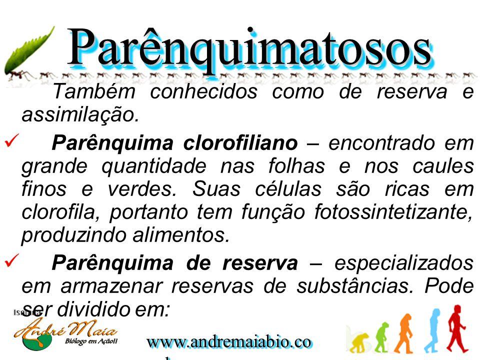 www.andremaiabio.co m.br Também conhecidos como de reserva e assimilação. Parênquima clorofiliano – encontrado em grande quantidade nas folhas e nos c