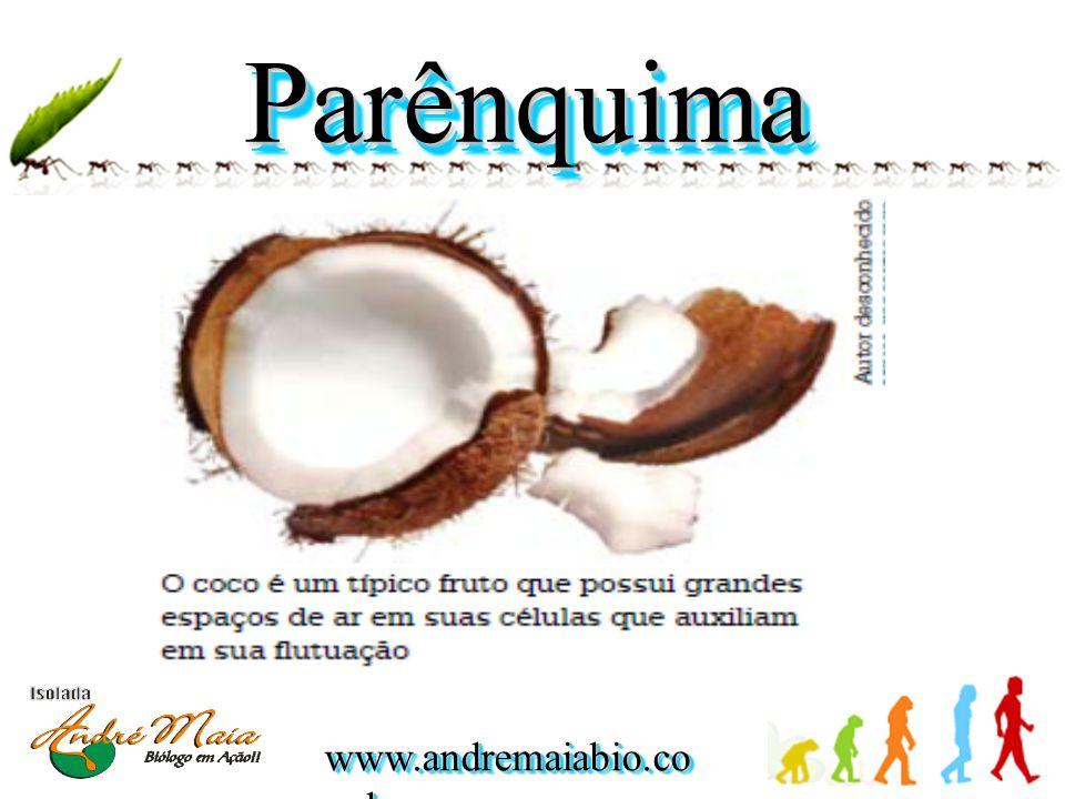 www.andremaiabio.co m.br ParênquimaParênquima