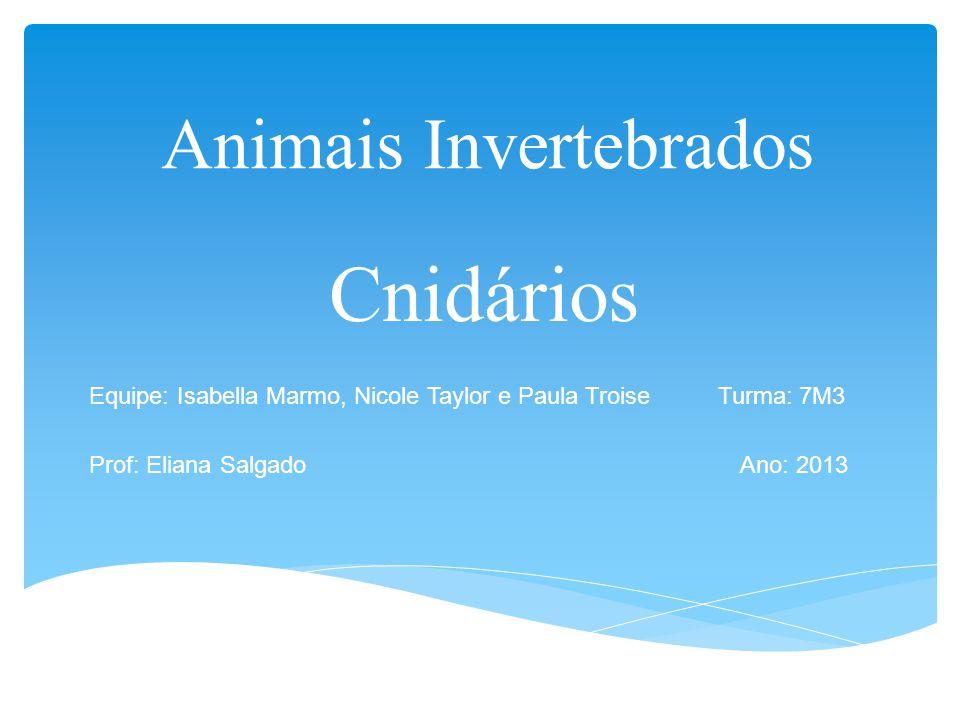 Animais Invertebrados Cnidários Equipe: Isabella Marmo, Nicole Taylor e Paula Troise Turma: 7M3 Prof: Eliana Salgado Ano: 2013