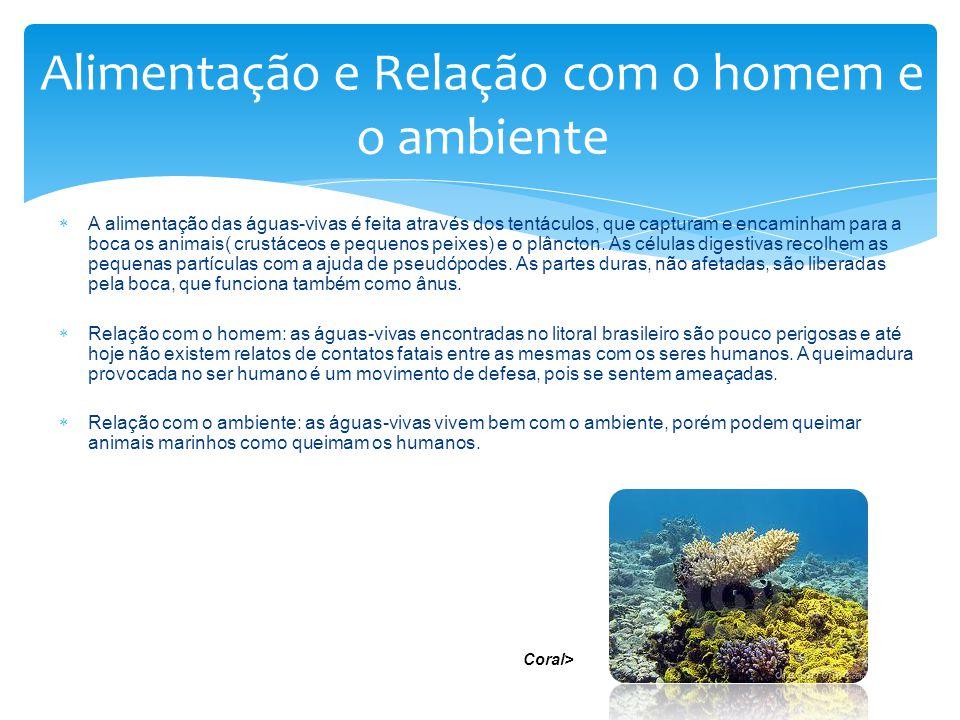 A alimentação das águas-vivas é feita através dos tentáculos, que capturam e encaminham para a boca os animais( crustáceos e pequenos peixes) e o plân