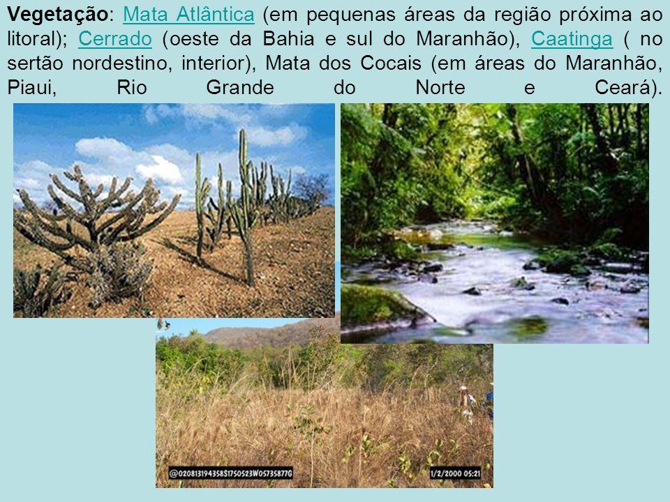 Vegetação: Mata Atlântica (em pequenas áreas da região próxima ao litoral); Cerrado (oeste da Bahia e sul do Maranhão), Caatinga ( no sertão nordestino, interior), Mata dos Cocais (em áreas do Maranhão, Piaui, Rio Grande do Norte e Ceará).Mata AtlânticaCerradoCaatinga