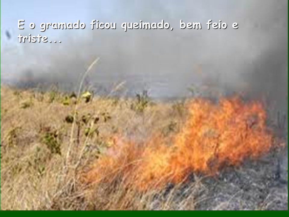 E o gramado ficou queimado, bem feio e triste...