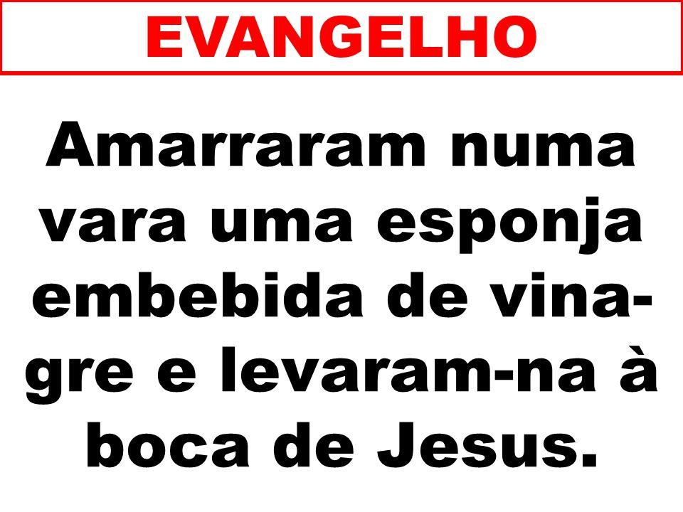 Amarraram numa vara uma esponja embebida de vina- gre e levaram-na à boca de Jesus. EVANGELHO