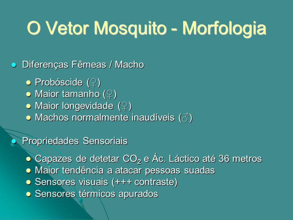 O Vetor Mosquito - Morfologia Diferenças Fêmeas / Macho Diferenças Fêmeas / Macho Probóscide () Probóscide () Maior tamanho () Maior tamanho () Maior longevidade () Maior longevidade () Machos normalmente inaudíveis () Machos normalmente inaudíveis () Propriedades Sensoriais Propriedades Sensoriais Capazes de detetar CO 2 e Ác.