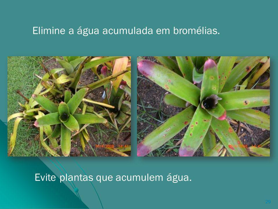 29 Elimine a água acumulada em bromélias. Evite plantas que acumulem água.