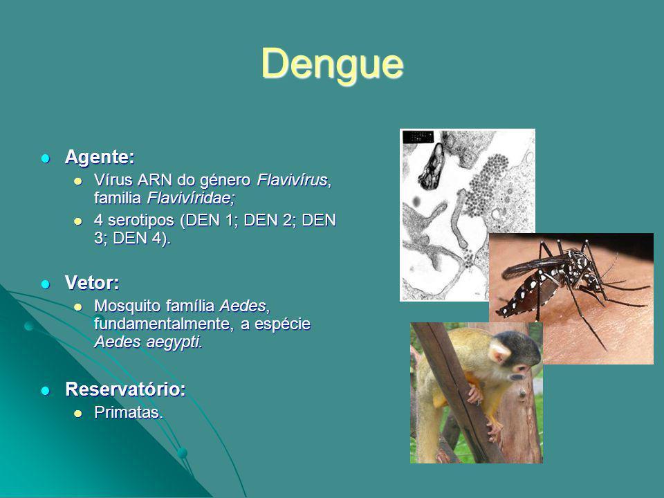 Dengue Agente: Agente: Vírus ARN do género Flavivírus, familia Flavivíridae; Vírus ARN do género Flavivírus, familia Flavivíridae; 4 serotipos (DEN 1; DEN 2; DEN 3; DEN 4).