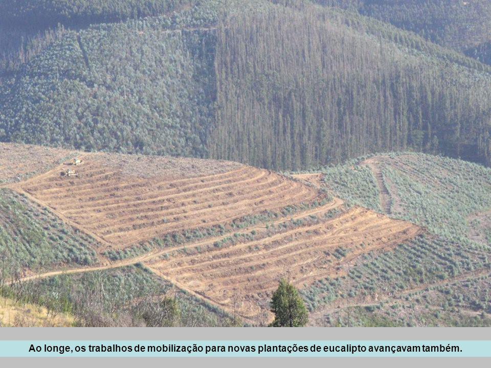 Ao longe, os trabalhos de mobilização para novas plantações de eucalipto avançavam também.