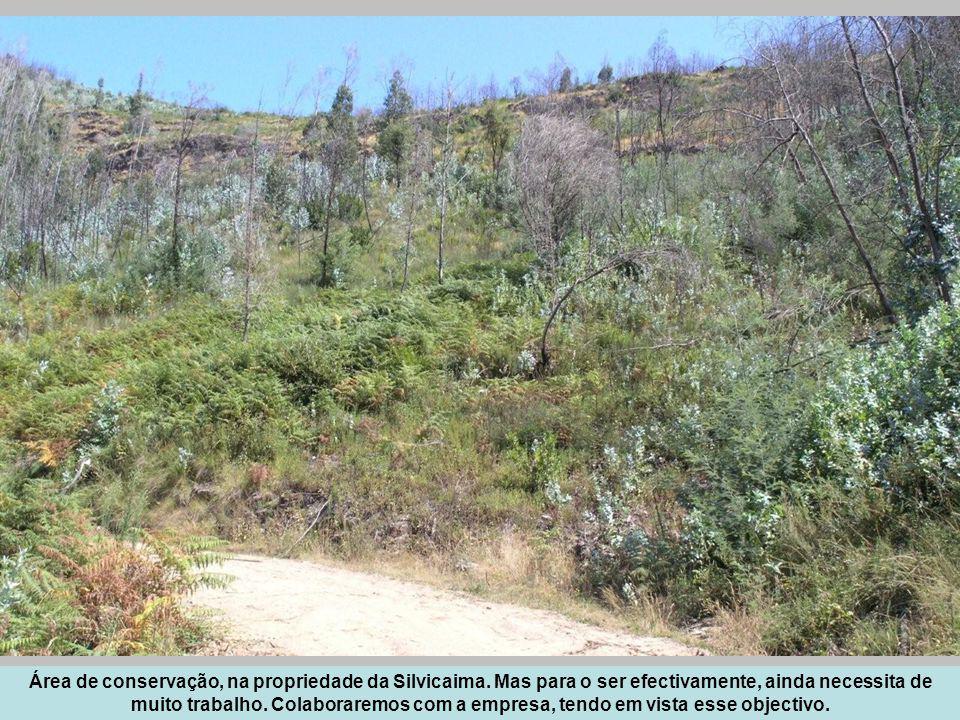 Área de conservação, na propriedade da Silvicaima. Mas para o ser efectivamente, ainda necessita de muito trabalho. Colaboraremos com a empresa, tendo