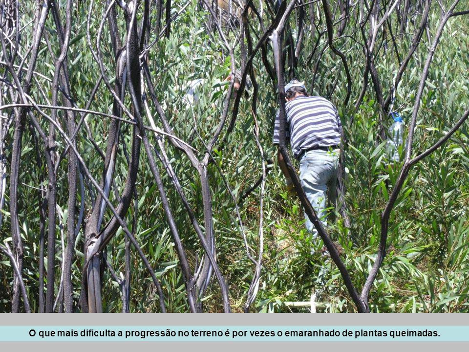 Para norte, observam-se as encostas do Rio Águeda, intensamente mobilizadas para novas plantações, após um incêndio que as atingiu em 2006.