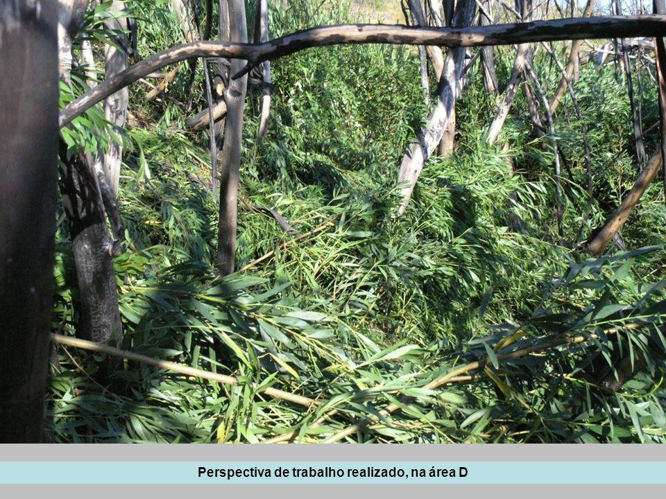 Nas áreas mais densas e mono-específicas de plantas de acácia com menos de 1 metro de altura optou- se por pulverizar, no entanto os resultados não são completamente satisfatórios.
