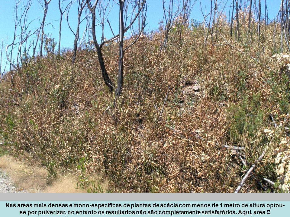 Nas áreas mais densas e mono-específicas de plantas de acácia com menos de 1 metro de altura optou- se por pulverizar, no entanto os resultados não sã