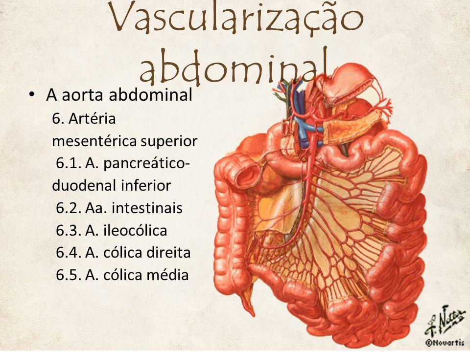 A aorta abdominal 6. Artéria mesentérica superior 6.1. A. pancreático- duodenal inferior 6.2. Aa. intestinais 6.3. A. ileocólica 6.4. A. cólica direit