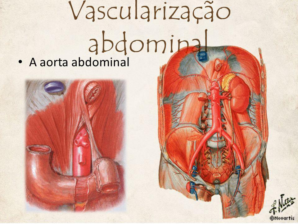 A veia cava inferior 6. Vv. Frênicas inferiores Vascularização abdominal