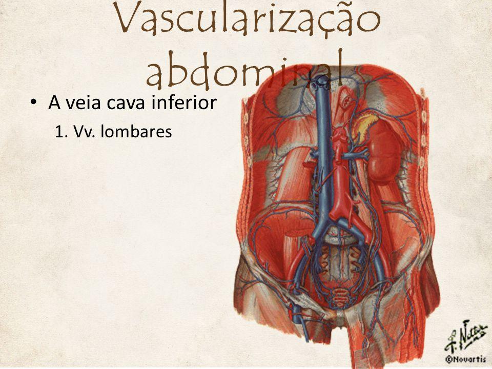 A veia cava inferior 1. Vv. lombares Vascularização abdominal