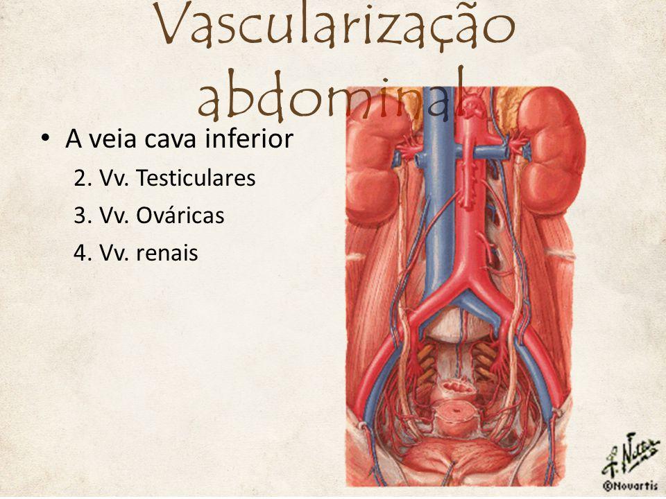 A veia cava inferior 2. Vv. Testiculares 3. Vv. Ováricas 4. Vv. renais Vascularização abdominal