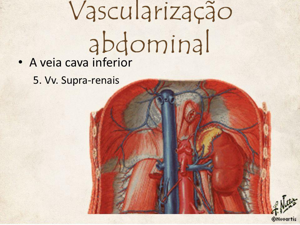 A veia cava inferior 5. Vv. Supra-renais Vascularização abdominal