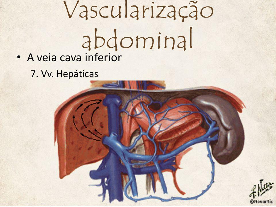A veia cava inferior 7. Vv. Hepáticas Vascularização abdominal