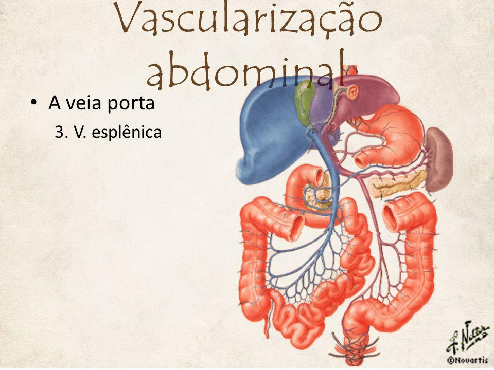 A veia porta 3. V. esplênica Vascularização abdominal