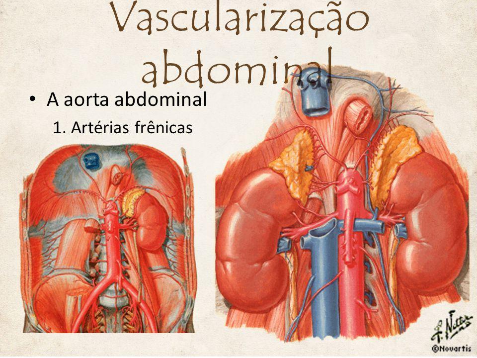 A aorta abdominal 2. Artérias supra-renais médias Vascularização abdominal