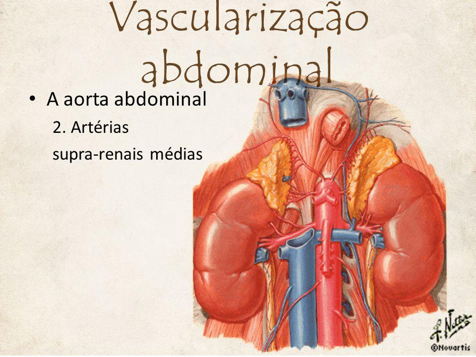 A aorta abdominal 7. Artéria mesentérica inferior Vascularização abdominal