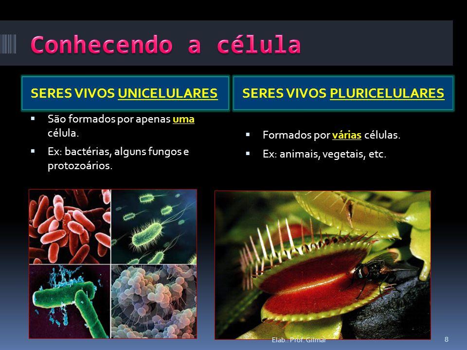 SERES VIVOS UNICELULARESSERES VIVOS PLURICELULARES São formados por apenas uma célula. Ex: bactérias, alguns fungos e protozoários. Formados por vária