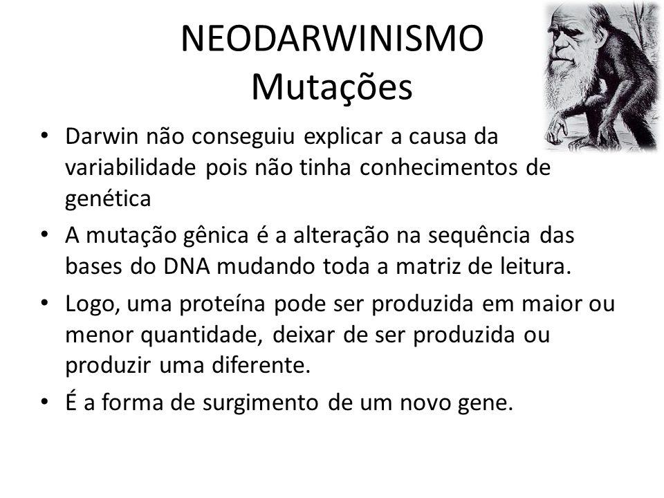 NEODARWINISMO Mutações Darwin não conseguiu explicar a causa da variabilidade pois não tinha conhecimentos de genética A mutação gênica é a alteração