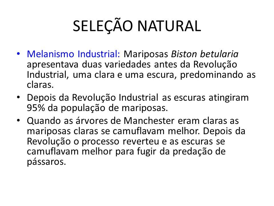 SELEÇÃO NATURAL Melanismo Industrial: Mariposas Biston betularia apresentava duas variedades antes da Revolução Industrial, uma clara e uma escura, pr