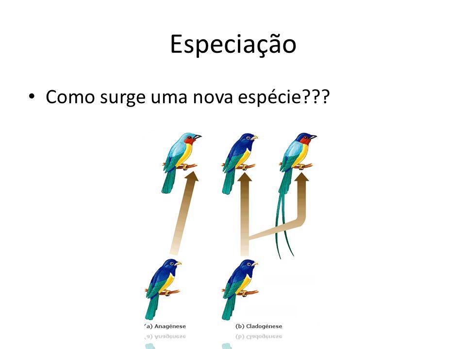 Especiação Como surge uma nova espécie???