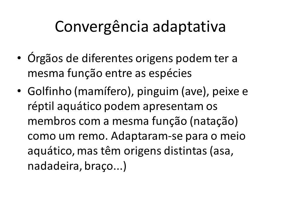 Convergência adaptativa Órgãos de diferentes origens podem ter a mesma função entre as espécies Golfinho (mamífero), pinguim (ave), peixe e réptil aqu