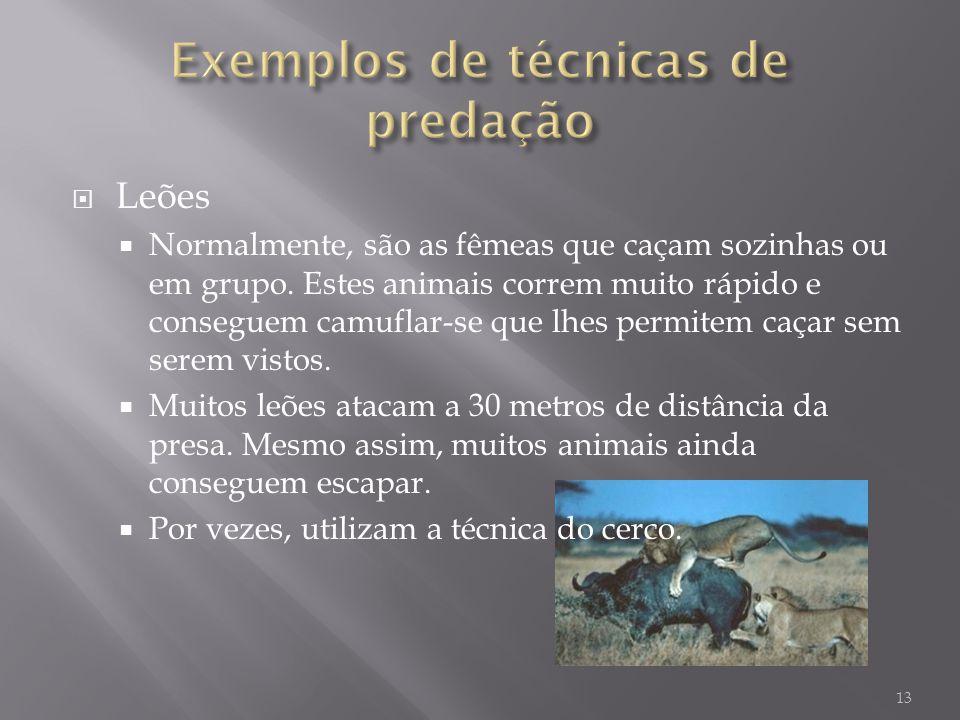 Leões Normalmente, são as fêmeas que caçam sozinhas ou em grupo. Estes animais correm muito rápido e conseguem camuflar-se que lhes permitem caçar sem