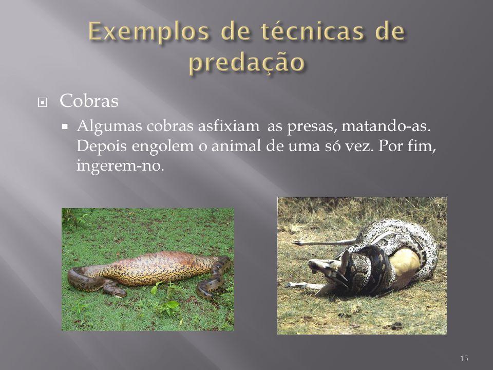 Cobras Algumas cobras asfixiam as presas, matando-as. Depois engolem o animal de uma só vez. Por fim, ingerem-no. 15