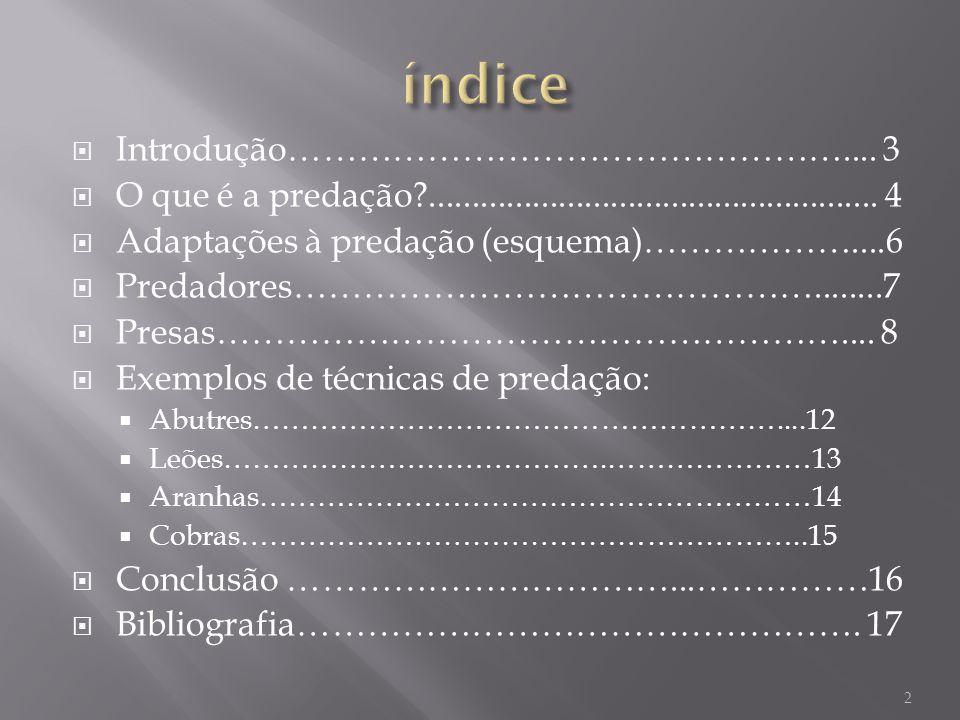 Introdução………………………………………….... 3 O que é a predação?.................................................... 4 Adaptações à predação (esquema)………………....6