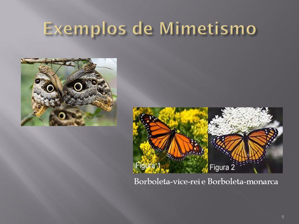 Camuflagem: É a capacidade que vários animais possuem de se confundir com o meio em que vivem; 10