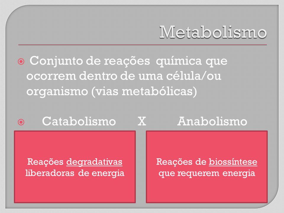 Conjunto de reações química que ocorrem dentro de uma célula/ou organismo (vias metabólicas) Catabolismo X Anabolismo Reações de biossíntese que requerem energia Reações degradativas liberadoras de energia