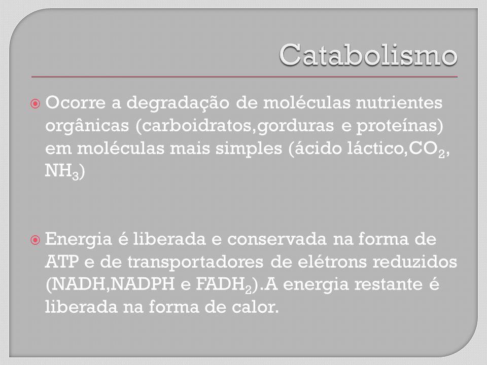Ocorre a degradação de moléculas nutrientes orgânicas (carboidratos,gorduras e proteínas) em moléculas mais simples (ácido láctico,CO 2, NH 3 ) Energia é liberada e conservada na forma de ATP e de transportadores de elétrons reduzidos (NADH,NADPH e FADH 2 ).A energia restante é liberada na forma de calor.