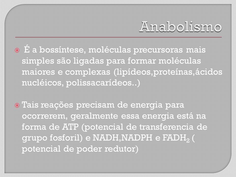 É a bossíntese, moléculas precursoras mais simples são ligadas para formar moléculas maiores e complexas (lipídeos,proteínas,ácidos nucléicos, polissacarídeos..) Tais reações precisam de energia para ocorrerem, geralmente essa energia está na forma de ATP (potencial de transferencia de grupo fosforil) e NADH,NADPH e FADH 2 ( potencial de poder redutor)