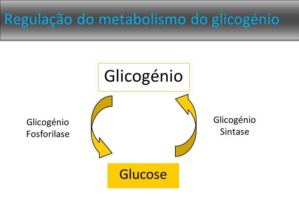 Regulação do metabolismo do glicogénio Glicogénio Glucose Glicogénio Fosforilase Glicogénio Sintase