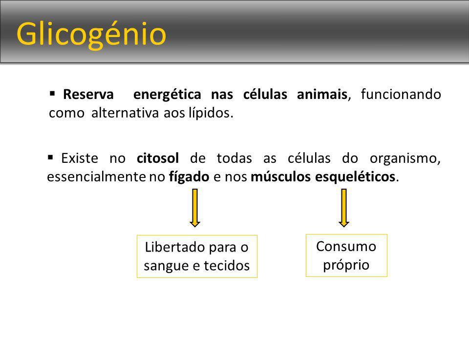 Glicogénio Reserva energética nas células animais, funcionando como alternativa aos lípidos. Existe no citosol de todas as células do organismo, essen
