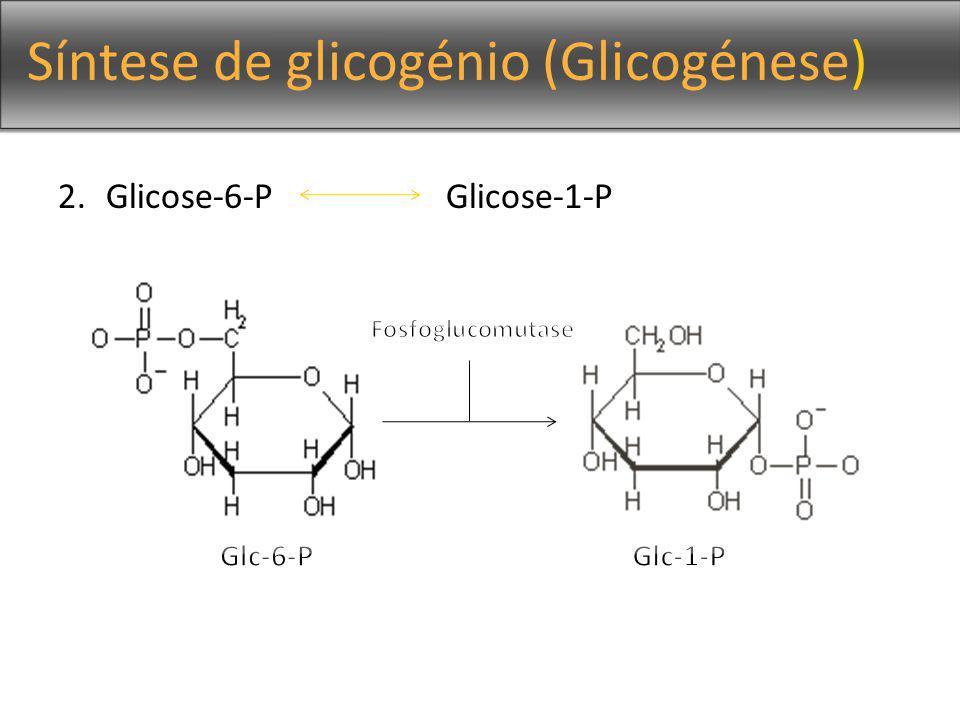 Síntese de glicogénio (Glicogénese) 3.Glc-1-P + UTP UDP-glc + PPi