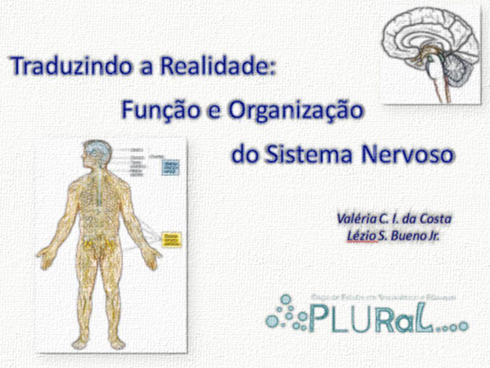 QUANTIDADE E COMPLEXIDADE DAS INFORMAÇÕES Medula Tronco Encefálico:Tronco Encefálico: Mesencéfalo Ponte Bulbo Diencéfalo ( Diencéfalo (Tálamo+Hipotálamo+Epitálamo) Telencéfalo: Córtex PrimárioTelencéfalo: Córtex Primário Telencéfalo: Córtex Associativo UnimodalCórtex Associativo Unimodal Integração, Análise eIntegração, Análise e Controle (elaboração e emissão da resposta) Controle (elaboração e emissão da resposta) ocorre nas seguintes estruturas:ocorre nas seguintes estruturas: Telencéfalo: Córtex Associativo MultimodalTelencéfalo: Córtex Associativo Multimodal 0:36