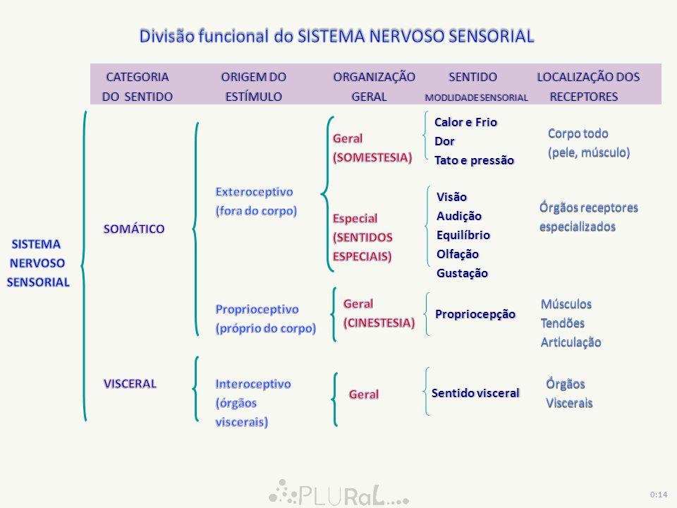 CATEGORIA ORIGEM DO ORGANIZAÇÃO SENTIDO LOCALIZAÇÃO DOS CATEGORIA ORIGEM DO ORGANIZAÇÃO SENTIDO LOCALIZAÇÃO DOS DO SENTIDO ESTÍMULO GERAL MODLIDADE SE