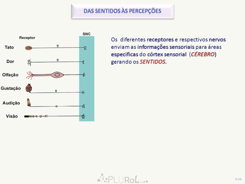 receptores nervos informações sensoriais especificascórtex sensorialCÉREBRO) SENTIDOS. Os diferentes receptores e respectivos nervos enviam as informa