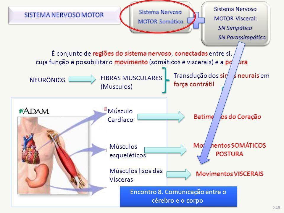 Músculos esqueléticos Músculos lisos das Vísceras Músculo Cardíaco sinais neurais força contrátil Transdução dos sinais neurais em força contrátil reg