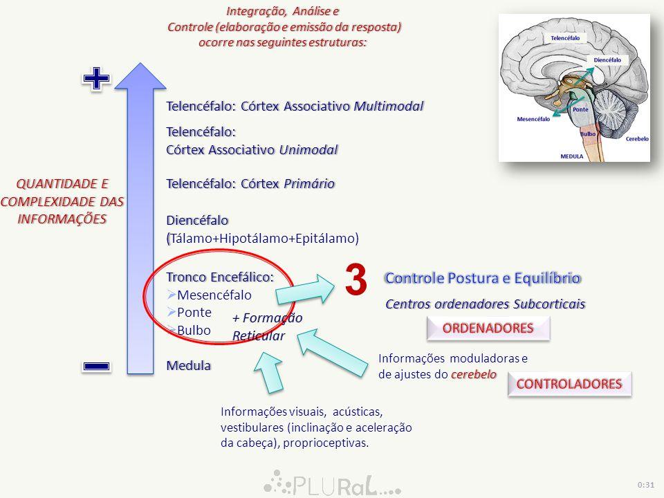 QUANTIDADE E COMPLEXIDADE DAS INFORMAÇÕES Medula Tronco Encefálico:Tronco Encefálico: Mesencéfalo Ponte Bulbo Diencéfalo ( Diencéfalo (Tálamo+Hipotála