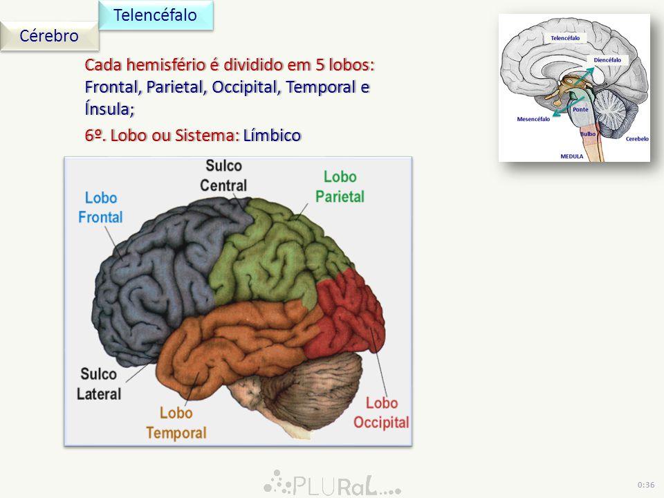 Cérebro Telencéfalo 0:36 Cada hemisfério é dividido em 5 lobos: Frontal, Parietal, Occipital, Temporal e Ínsula; 6º. Lobo ou Sistema: Límbico6º. Lobo