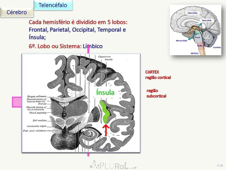 Cérebro Telencéfalo Cada hemisfério é dividido em 5 lobos: Frontal, Parietal, Occipital, Temporal e Ínsula; 6º. Lobo ou Sistema: Límbico6º. Lobo ou Si