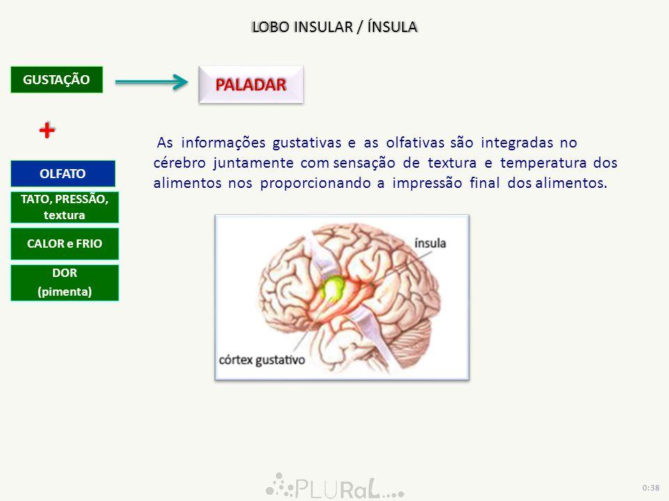 GUSTAÇÃO As informações gustativas e as olfativas são integradas no cérebro juntamente com sensação de textura e temperatura dos alimentos nos proporc