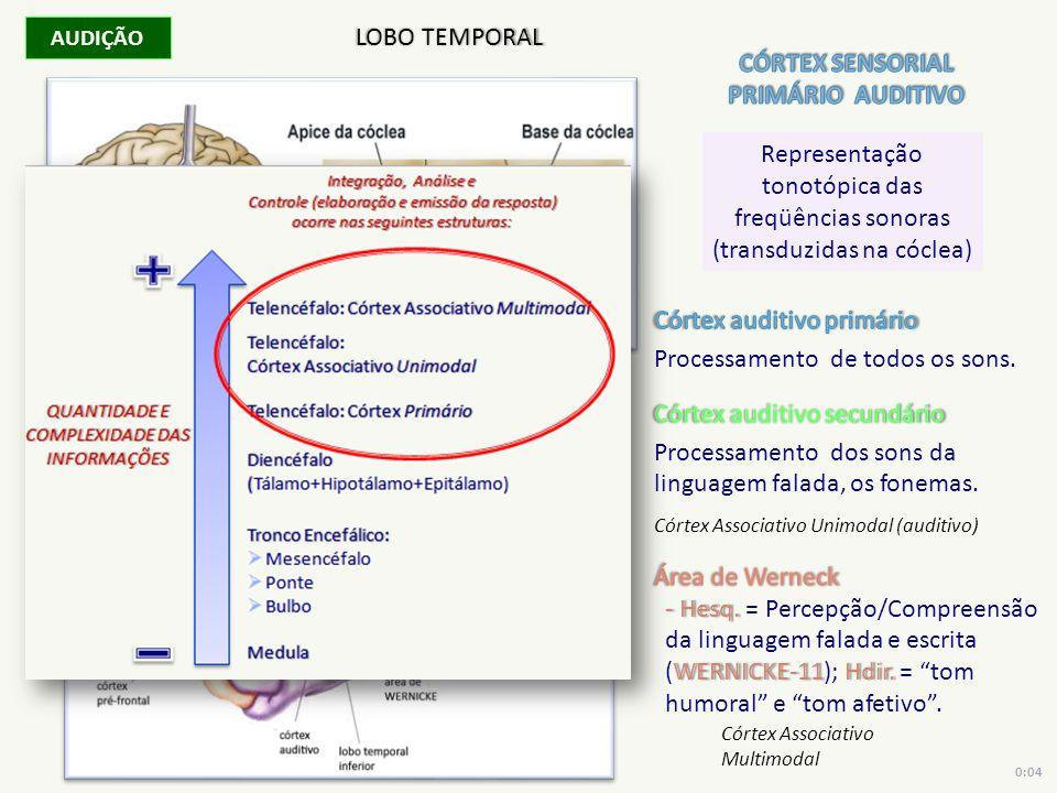 AUDIÇÃO Representação tonotópica das freqüências sonoras (transduzidas na cóclea) LOBO TEMPORAL Córtex Associativo Unimodal (auditivo) Córtex Associat