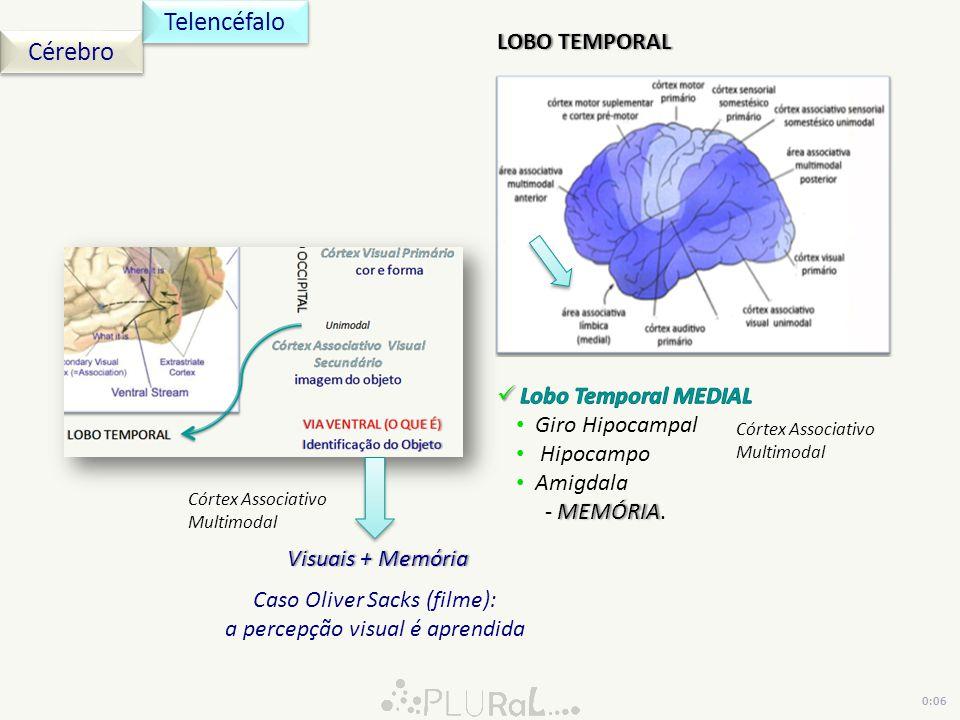 Cérebro Telencéfalo LOBO TEMPORALLOBO TEMPORAL Córtex Associativo Multimodal Visuais + MemóriaVisuais + Memória Caso Oliver Sacks (filme): a percepção