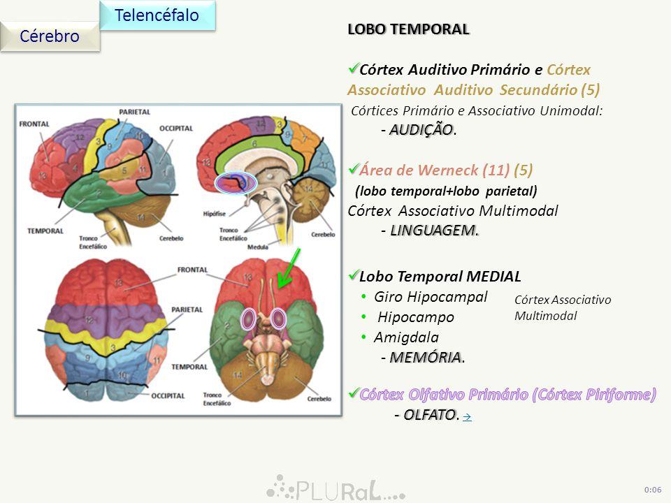 Cérebro Telencéfalo LOBO TEMPORALLOBO TEMPORAL Córtex Auditivo Primário e Córtex Associativo Auditivo Secundário (5) Córtices Primário e Associativo U